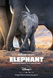 Fil – Elephant (2020) – tr alt yazılı izle
