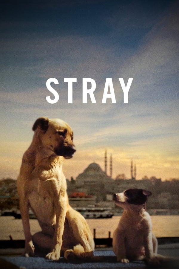 Stray (2020) Türkçe izle